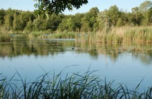 Réserve naturelle de l'étang Saint-Ladre (photo : Somme Tourisme)