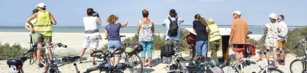 En regardant les phoques de la Baie de Somme